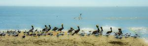 Beach Bird Party