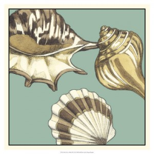 Shell Trio on Blue III