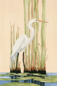 Great White Egret Gene Rizzo