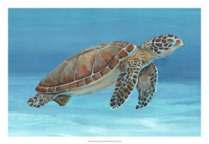 Ocean Sea Turtle 1 22261z OToole
