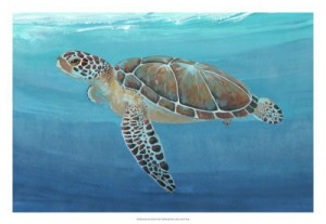 Ocean Sea Turtle 2 22262z Otoole
