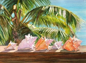 elaine hahn  conchs in the sun
