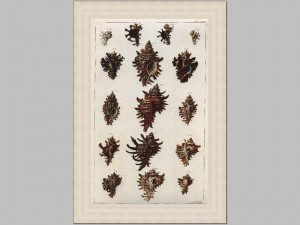 Shell Collection 1 40x58 Price Code V