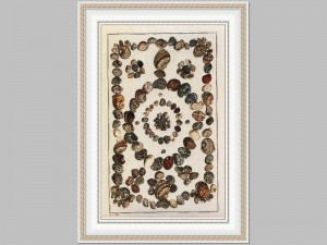 Shell Design Collection 1 40x58 Price Code V