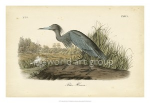 audubon Louisiana Heron 30x40 or 24x30